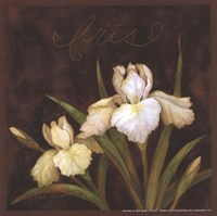 Midnight Iris Fine-Art Print
