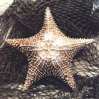 Starfish With Net Fine-Art Print