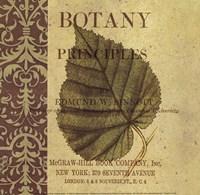 Botany Principles III Fine-Art Print