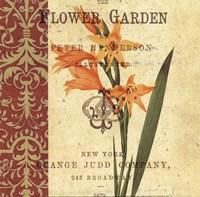 Gladiolus I Fine-Art Print