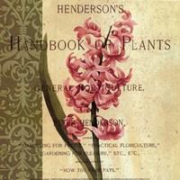 Hyacinth Fine-Art Print