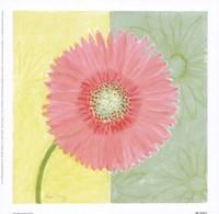 Pink Daisy Fine-Art Print