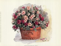Impatiens Portrait Fine-Art Print