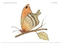 Butterfly In Orange Fine-Art Print