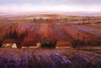 Sense Of Lavender Fine-Art Print