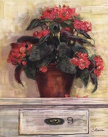 Begonias Fine-Art Print
