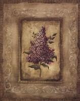 Savin Lilac Fine-Art Print