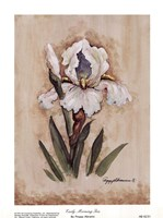 Early Morning Iris Fine-Art Print