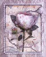 Love Letter Peonies Fine-Art Print