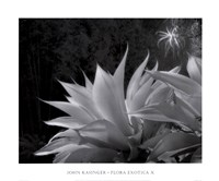 Flora Exotica X Fine-Art Print