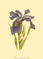 Iris Bloom V Fine-Art Print