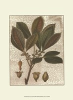 Leaves III Fine-Art Print