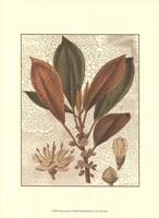 Leaves IV Fine-Art Print