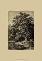 Oak Tree Fine-Art Print
