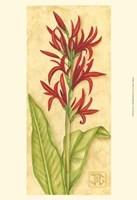 Red Canna Fine-Art Print