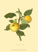 Grange Apple Fine-Art Print