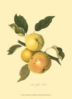 Yellow Elliot Fine-Art Print