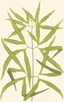 Woodland Ferns I Fine-Art Print