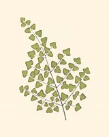 Woodland Ferns II Fine-Art Print