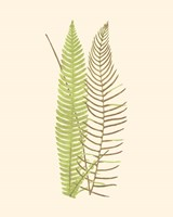 Woodland Ferns V Fine-Art Print