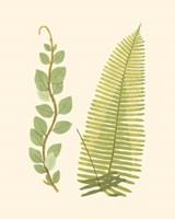 Woodland Ferns VI Fine-Art Print