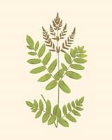 Woodland Ferns VII Fine-Art Print