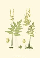 Spring Ferns I Fine-Art Print