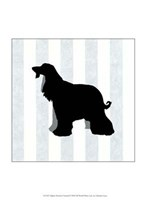 Afghan Hound In Neutral Fine-Art Print