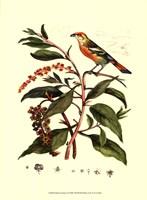 Bird In Nature I Fine-Art Print