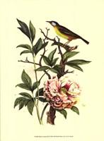 Bird In Nature III Fine-Art Print