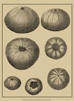 Shells On Khaki I Fine-Art Print