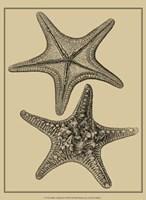 Shells On Khaki II Fine-Art Print