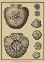 Shells On Khaki III Fine-Art Print