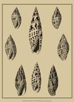 Shells On Khaki IV Fine-Art Print