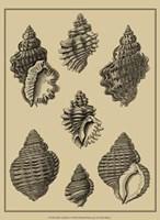 Shells On Khaki V Fine-Art Print