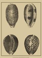 Shells On Khaki VI Fine-Art Print