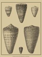 Shells On Khaki VII Fine-Art Print