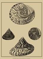 Shells On Khaki VIII Fine-Art Print