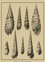 Shells On Khaki IX Fine-Art Print