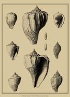 Shells On Khaki X Fine-Art Print