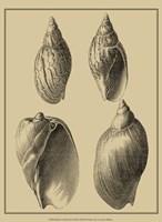 Shells On Khaki XI Fine-Art Print