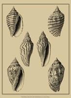 Shells On Khaki XII Fine-Art Print