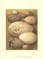 Bird Egg Collection I Fine-Art Print