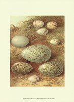 Bird Egg Collection II Fine-Art Print