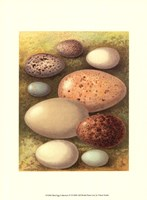 Bird Egg Collection IV Fine-Art Print