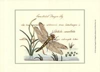 Antique Dragonfly I Fine-Art Print