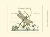 Antique Dragonfly II Fine-Art Print