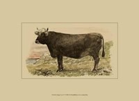 Antique Cow V Fine-Art Print