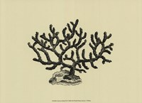 Coral On Khaki III Fine-Art Print