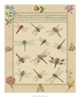 Dragonfly Manuscript I Giclee